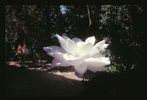 choi-jeong-hwa-venice-biennale-white-lotus-20051