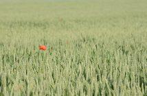 obrechies-semaine-sans-pesticides