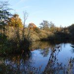 reserve-naturelle-pantegnies-pont-sur-sambre (2)